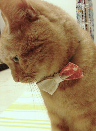 DIY Bow Tie for Dog or Cat